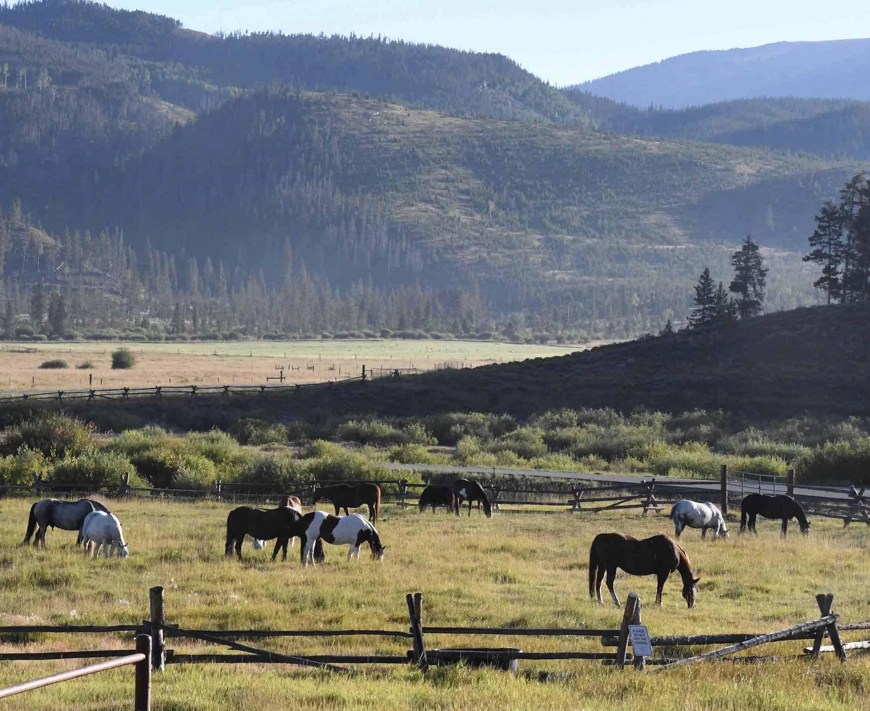 Ranch Horses grazing at Devil's Thumb Ranch